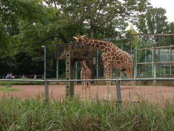 動物 公園 自然 こども 県 埼玉